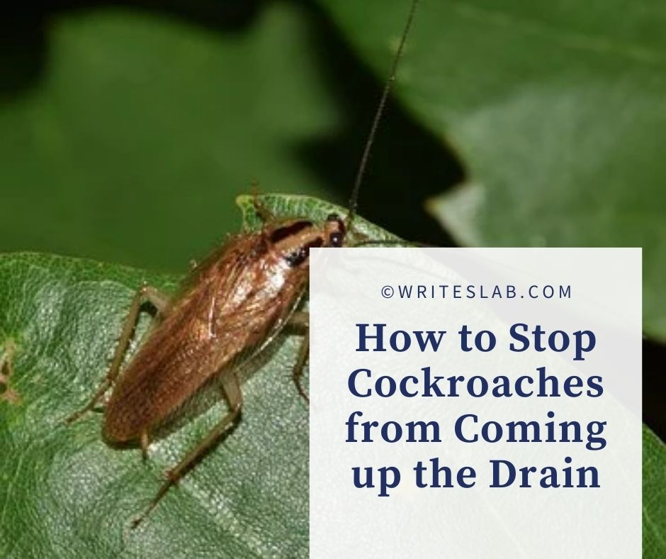 How to Stop Cockroaches from Coming up the Drain