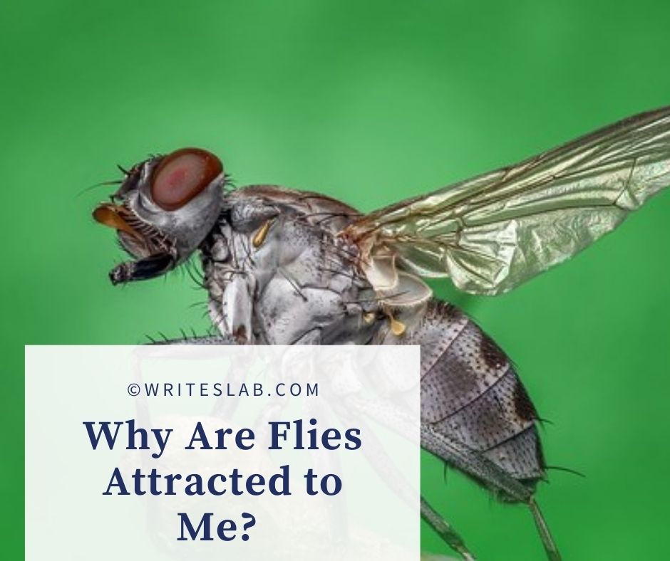 Why Are Flies Attracted to Me?