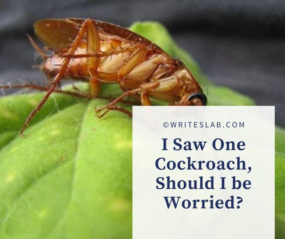 I Saw One Cockroach, Should I be Worried?