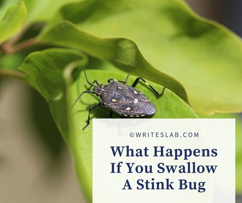 What Happens If You Swallow A Stink Bug