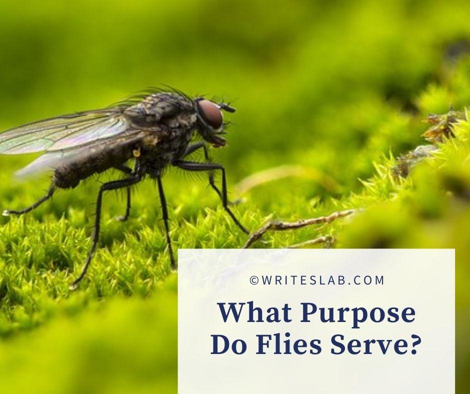 What Purpose Do Flies Serve?
