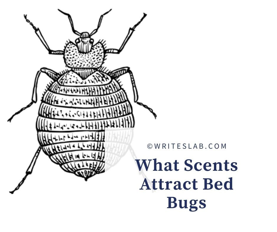What Scents Attract Bed Bugs