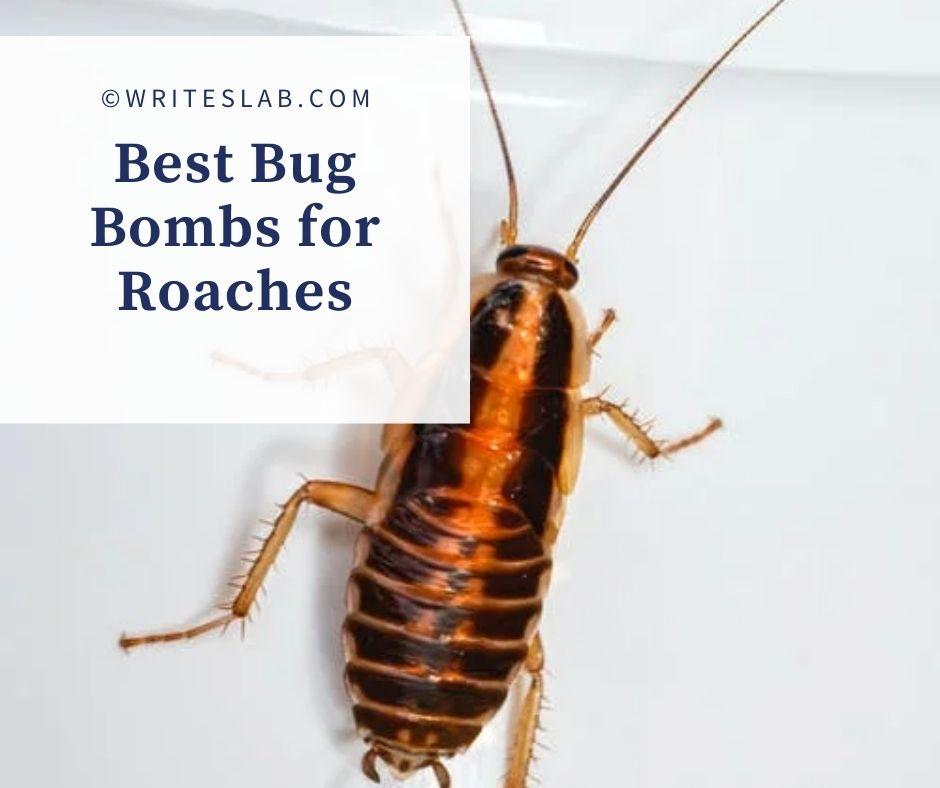 Best Bug Bombs for Roaches