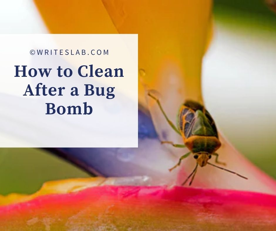 How to Clean After a Bug Bomb