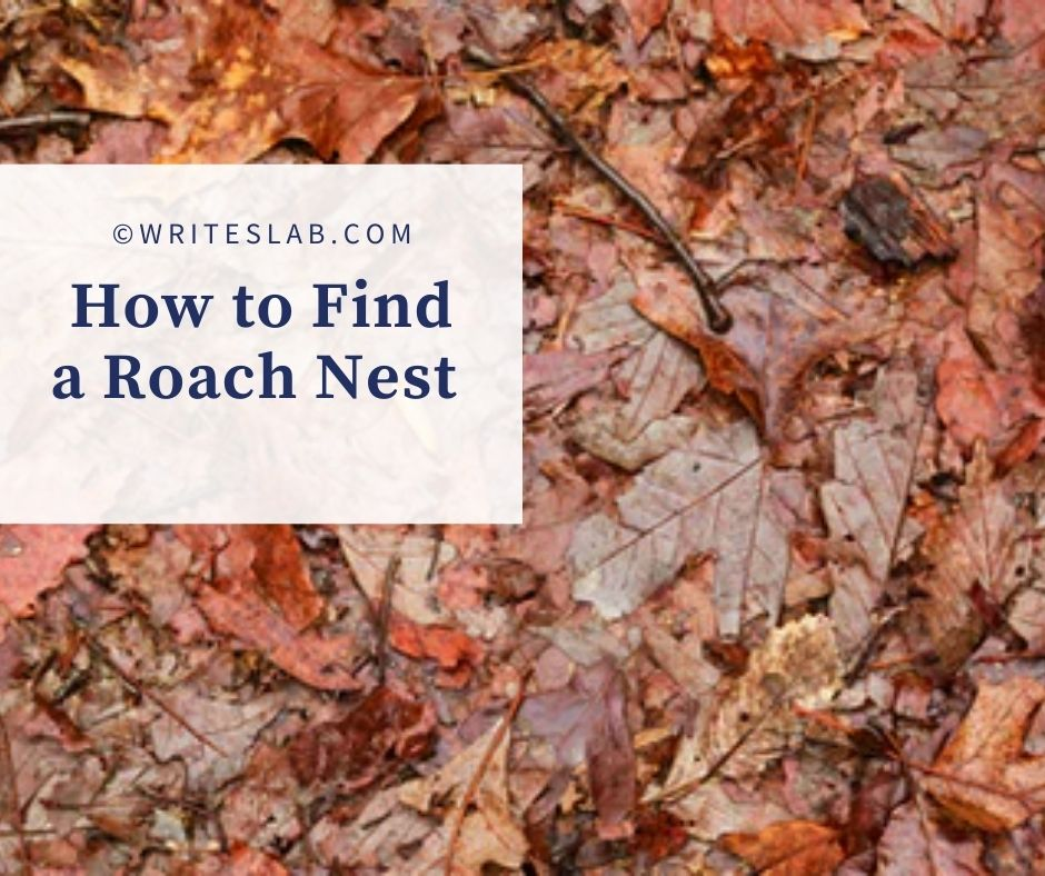 How to Find a Roach Nest