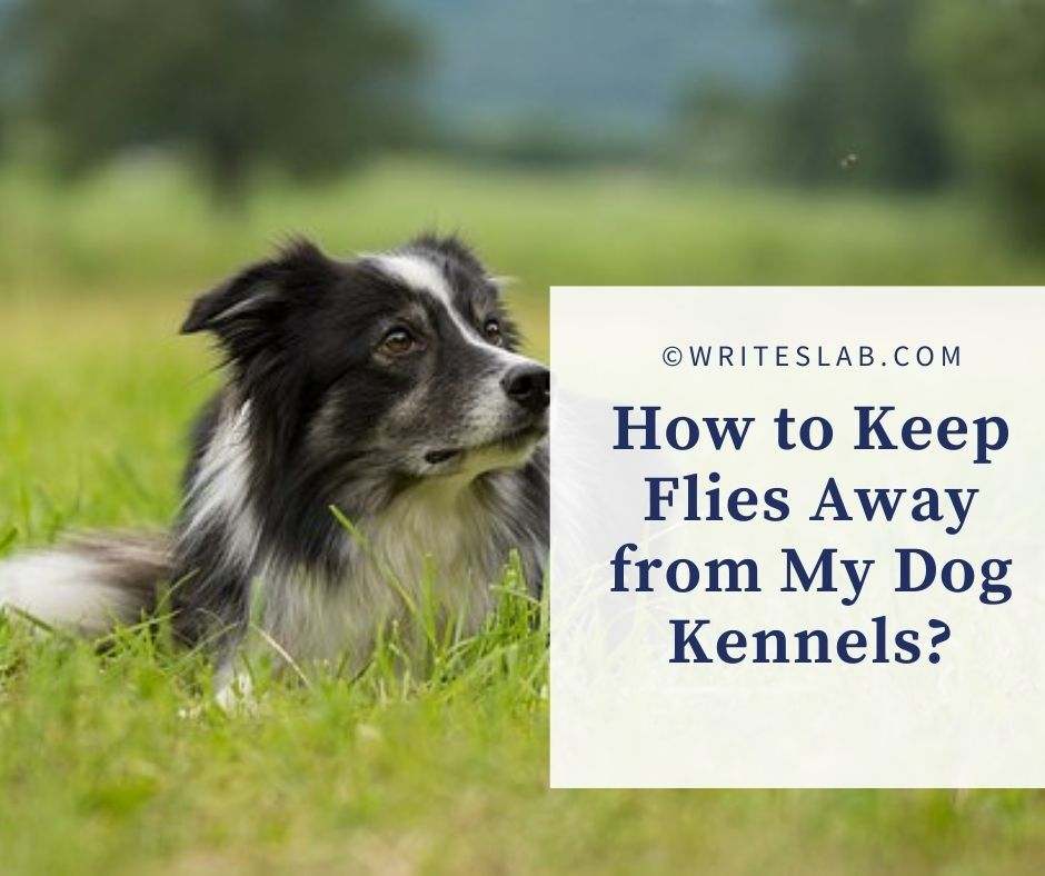 How to Keep Flies Away from My Dog Kennels?