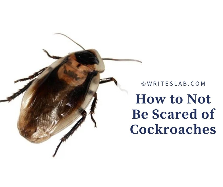 How to Not Be Scared of Cockroaches