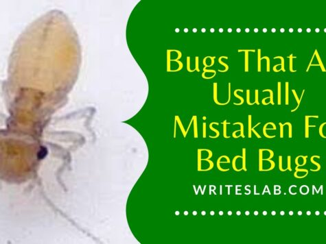 4 Bugs That Are Usually Mistaken For Bed Bugs