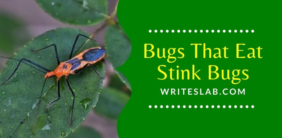 Bugs That Eat Stink Bugs