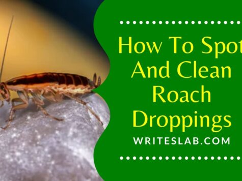 How To Spot And Clean Roach Droppings