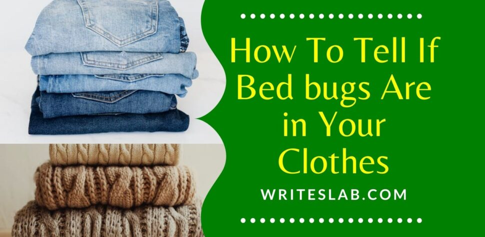 How To Tell If Bed bugs Are in Your Clothes