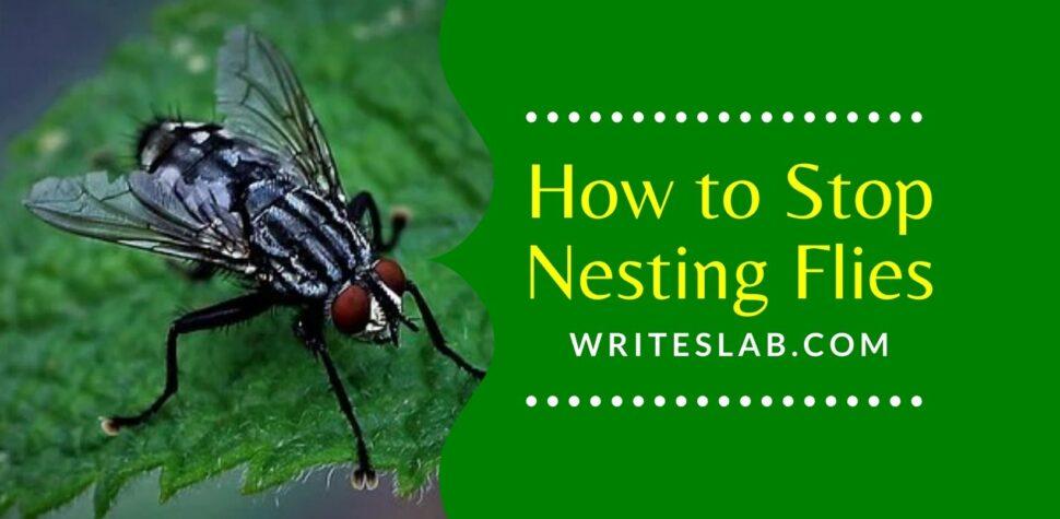 How to Stop Nesting Flies Nesting in Window Frames