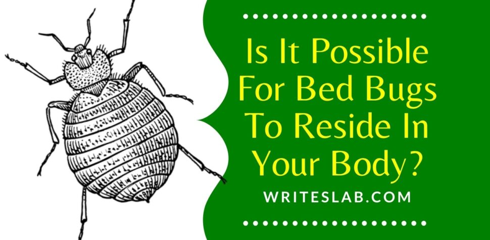 Is It Possible For Bed Bugs To Reside In Your Body