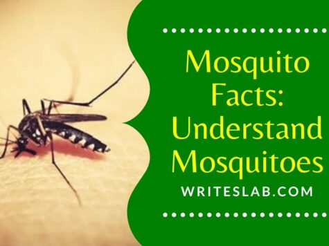 Mosquito Facts Understand Mosquitoes