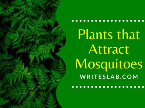 Plants that Attract Mosquitoes