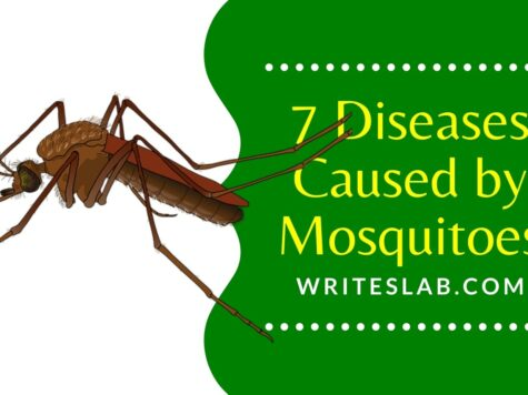 7 Diseases Caused by Mosquitoes