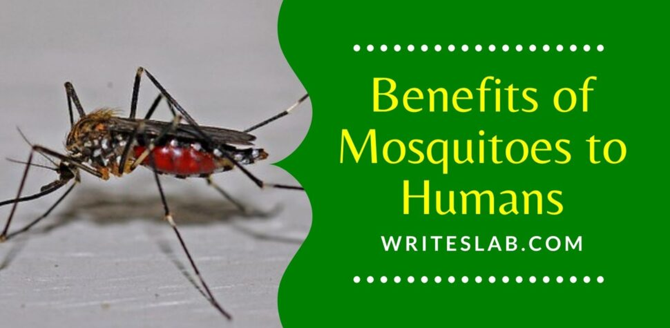 Benefits of Mosquitoes to Humans