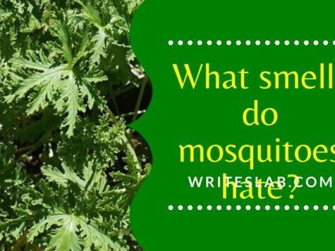 What smells do mosquitoes hate?