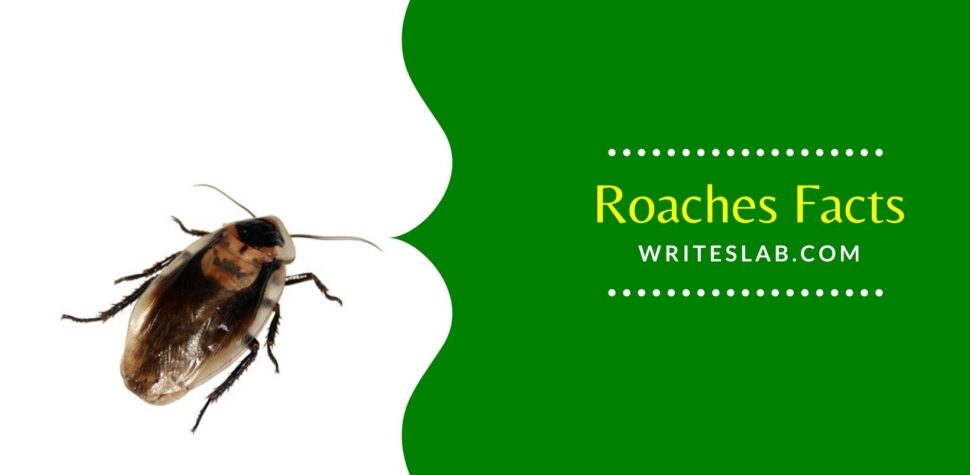 Roaches Facts