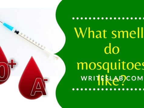 What smells do mosquitoes like?