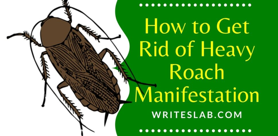 How to Get Rid of Heavy Roach Manifestation