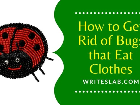 How to Get Rid of Bugs that Eat Clothes
