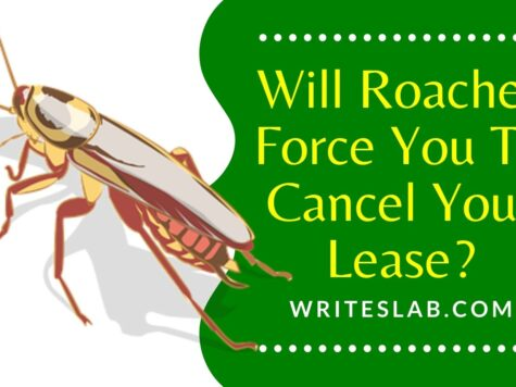 Will Roaches Force You To Cancel Your Lease?