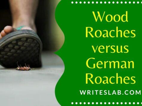 Wood Roaches versus German Roaches