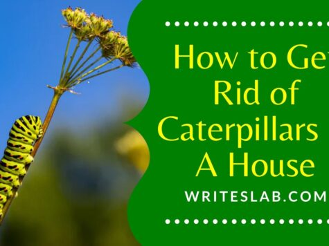 How to Get Rid of Caterpillars in A House