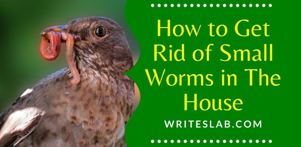 How to Get Rid of Small Worms in The House