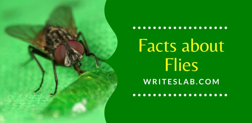 Facts about Flies