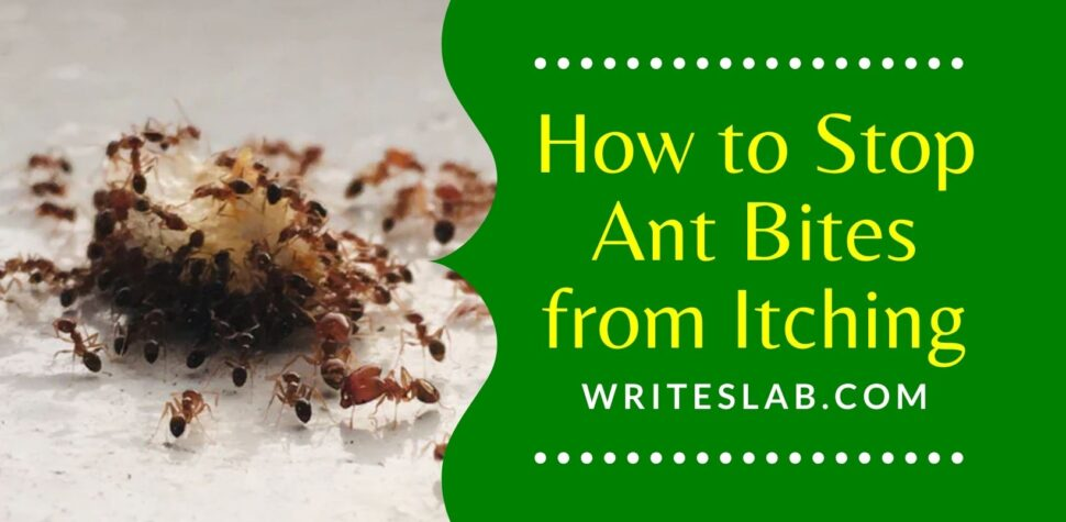 How to Stop Ant Bites from Itching