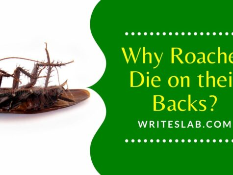 Why Roaches Die on their Backs?