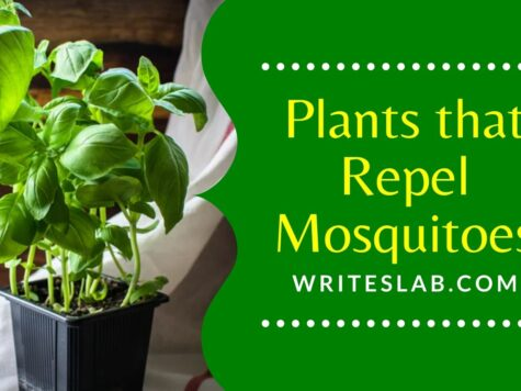 Plants that Repel Mosquitoes in Florida
