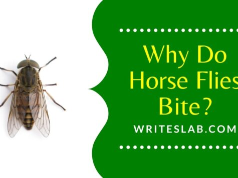 Why Do Horse Flies Bite?