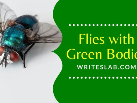 Flies with Green Bodies