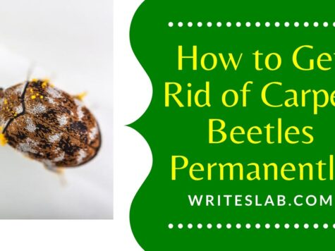 How to Get Rid of Carpet Beetles Permanently