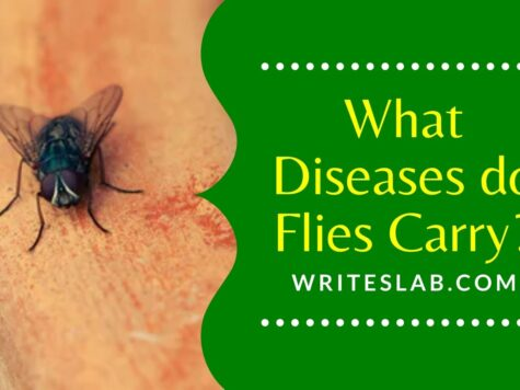 What Diseases do Flies Carry?