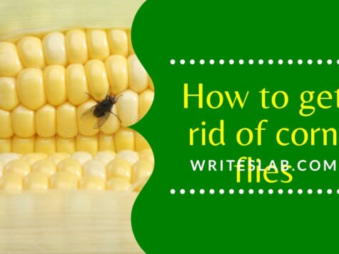 How to get rid of corn flies and hover flies
