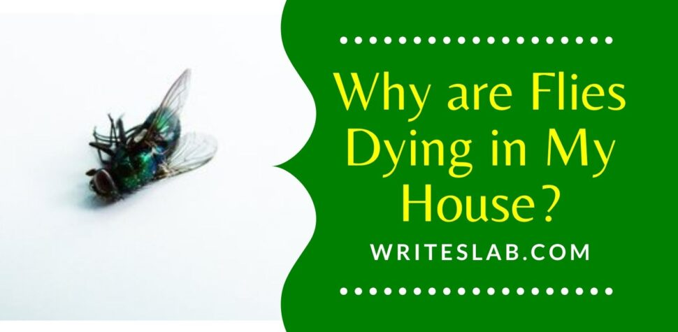 Why are Flies Dying in My House?
