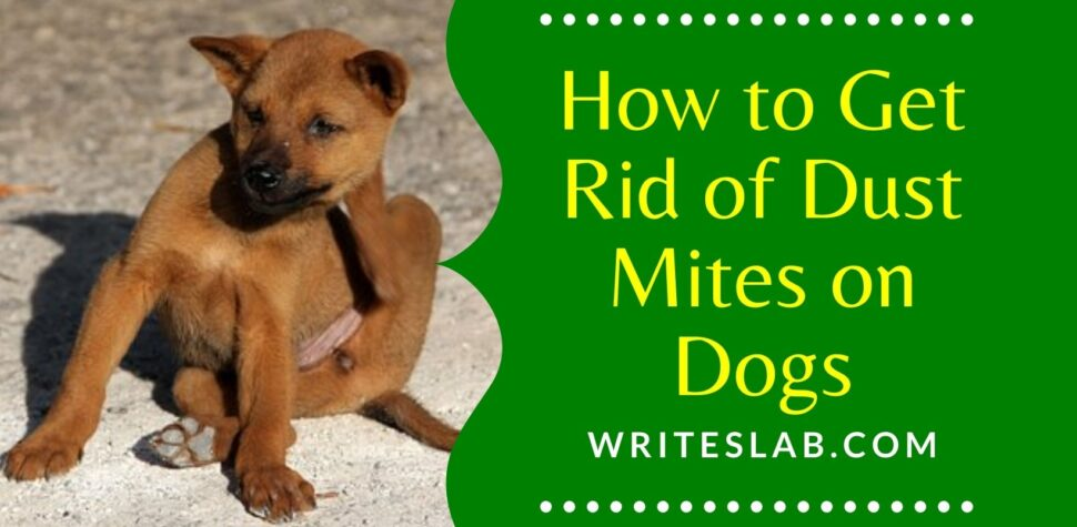 How to Get Rid of Dust Mites on Dogs
