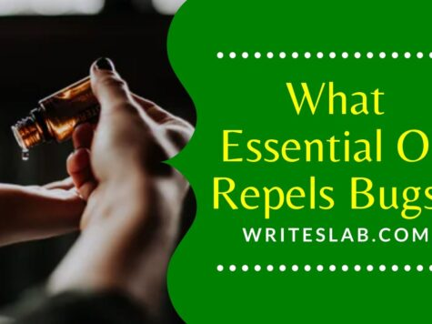 What Essential Oil Repels Bugs?