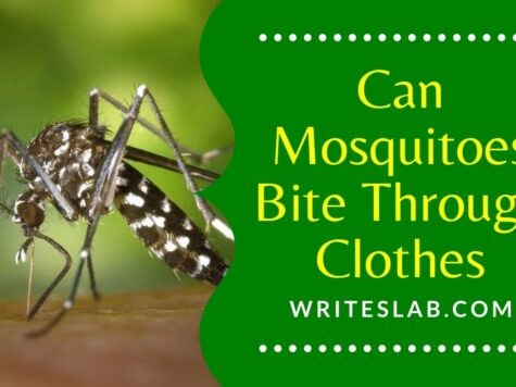 Can Mosquitoes Bite Through Clothes