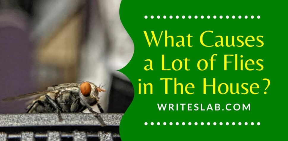 What Causes a Lot of Flies in The House?