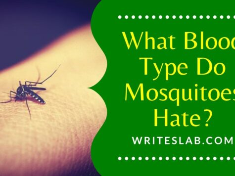 What Blood Type Do Mosquitoes Hate?