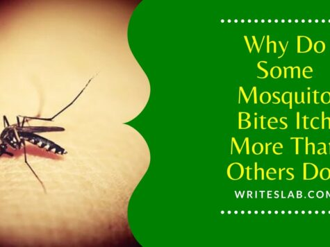 Why Do Some Mosquito Bites Itch More Than Others Do?