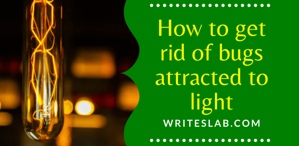 How to get rid of bugs attracted to light