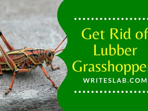 How to Get Rid of Lubber Grasshoppers