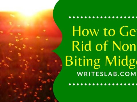 How to Get Rid of Non-Biting Midges
