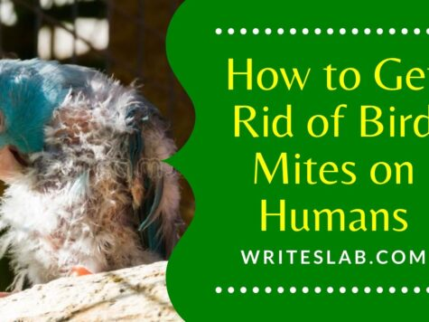 How to Get Rid of Bird Mites on Humans